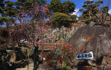 不老園 梅の名所 梅園 山梨県観光 開花情報 おすすめスポット かぶと岩
